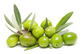 Cayetano olijfolie: een topper onder de Spaanse olijfoliën. Zeer lage zuurgraad, rijke smaak en een unieke olijfsoort. Kijk voor meer informatie.